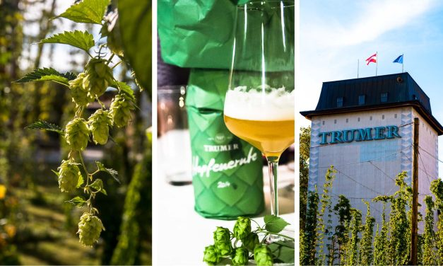 Noch einmal in den Sommer, noch einmal in die Trumer Brauerei und ein Bier unter Kastanienbäumen trinken