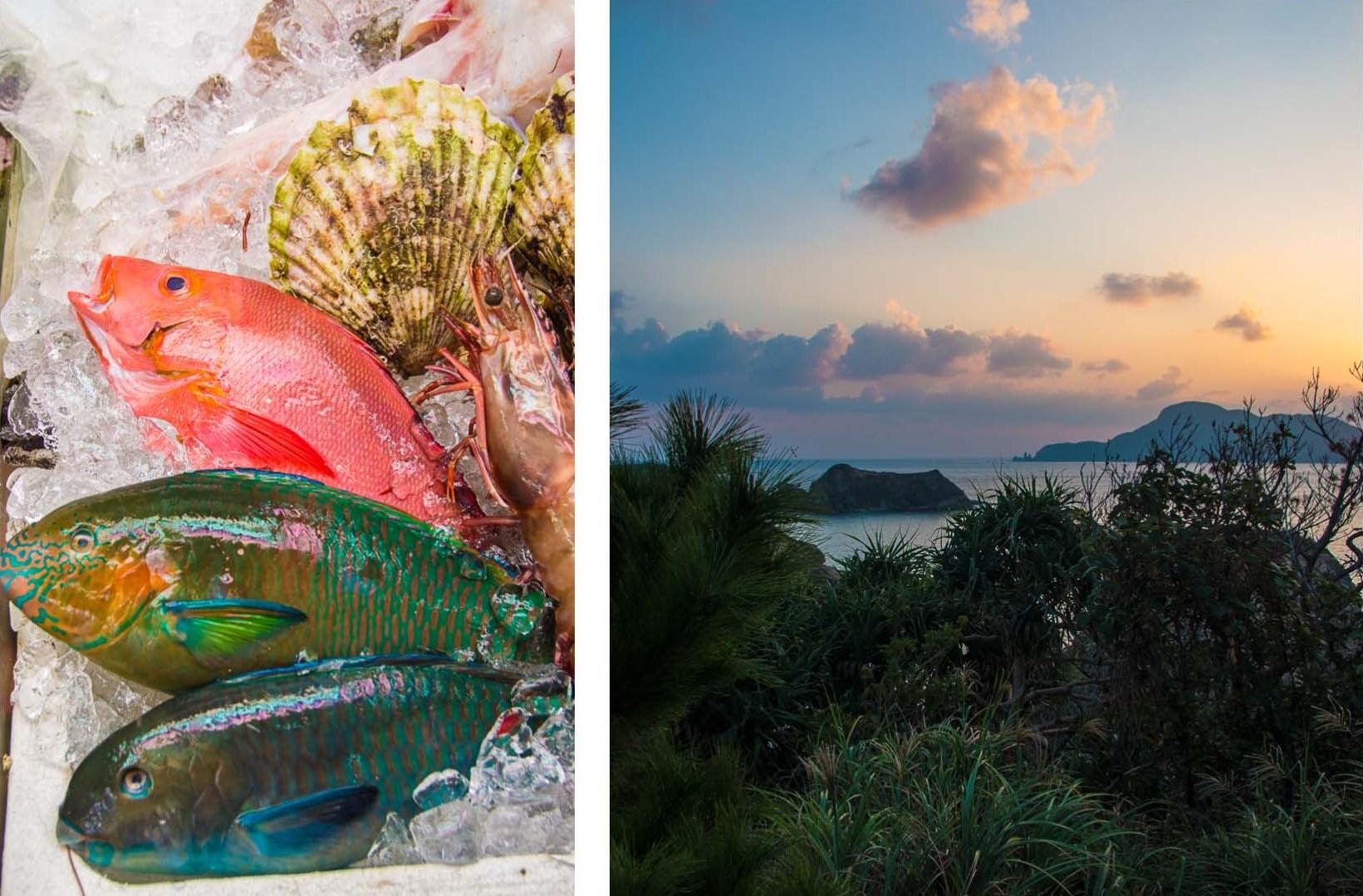 Auf nach Okinawa! türkisfarbener Pazifik, Fischmärkte und wo Hirsche nachts an weißen Sandstränden spazieren gehen