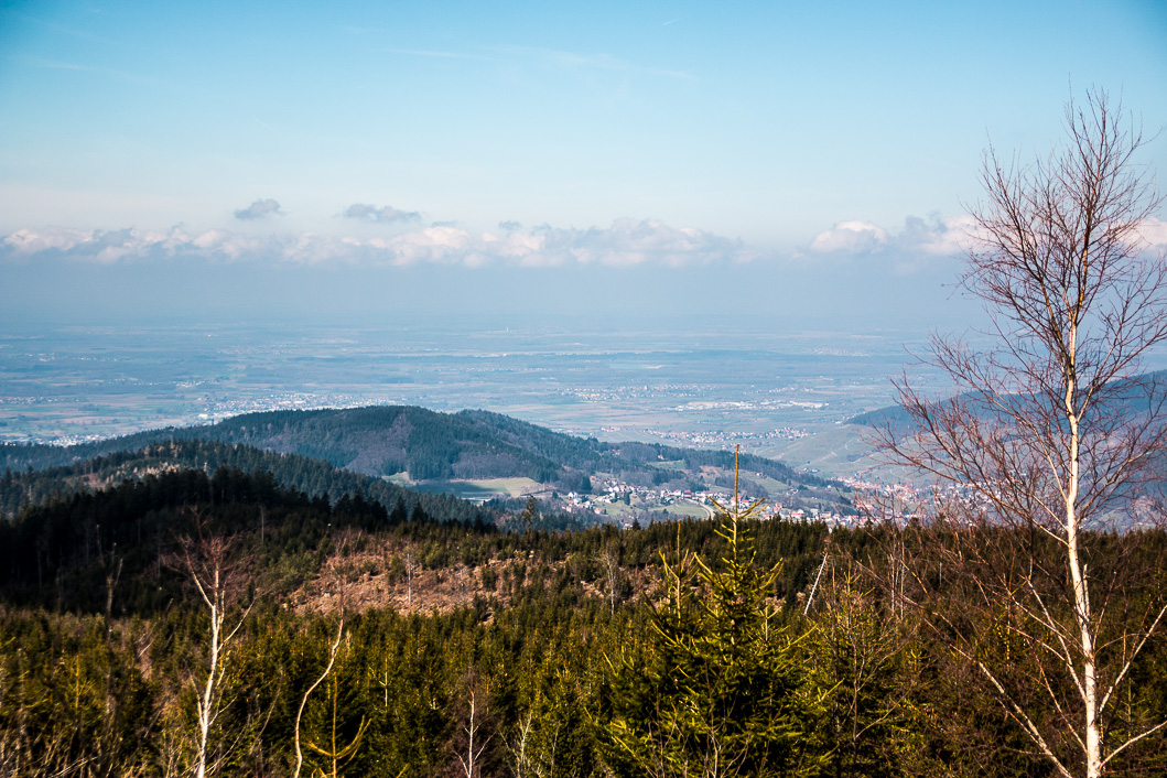 Schwarzwald Miso-1-5