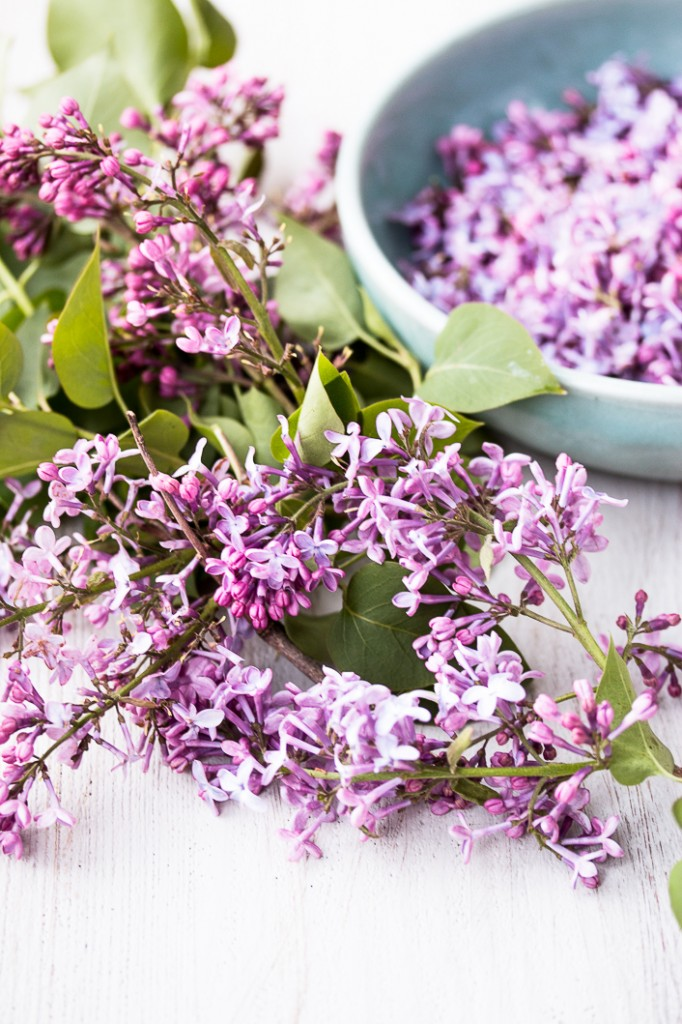 Lilac-1-4