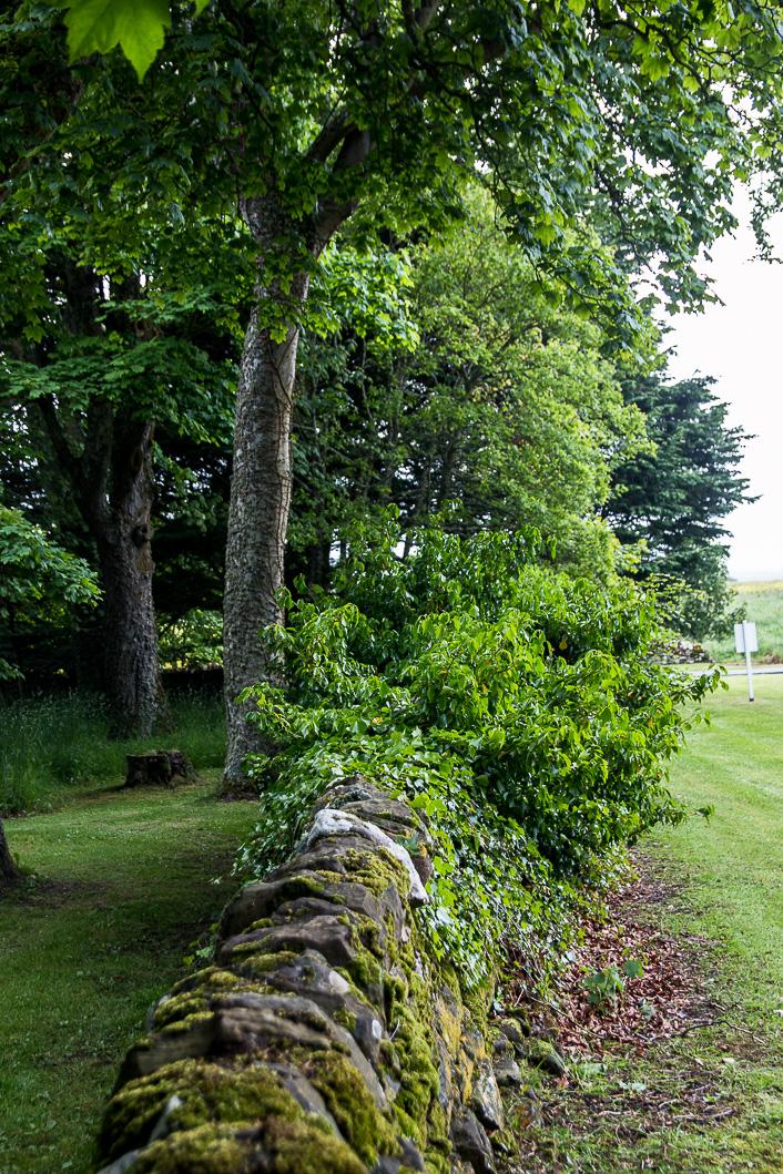 Tain Glenmorangie-5