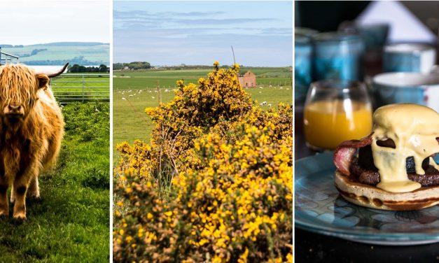 Schottlands blühende Highlands –glückliche Tage mit Whisky, Haggis, alten Steinen und Hochlandrindern