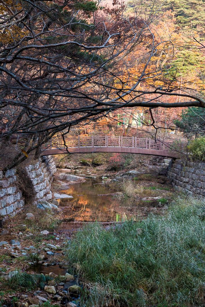 wetlands korea-2