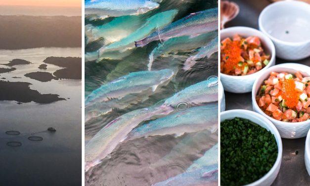 Wo bitte geht's zum Lachs? Ein Besuch der Aquakultur im norwegischen Bergen