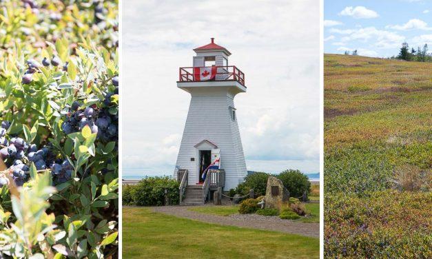 My Blueberry Days in Nova Scotia – wilde Blaubeeren soweit das Auge reicht und ein ziemlich turbulenter Reiseauftakt
