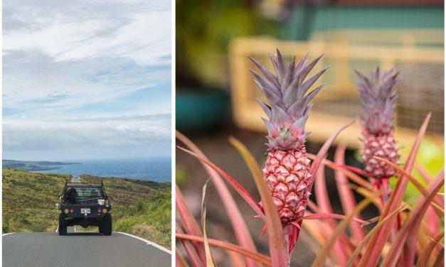 Aloha Maui – surfende Ziegen, Ananas Sekt, tropische Farmen und die andere Straße nach Hana