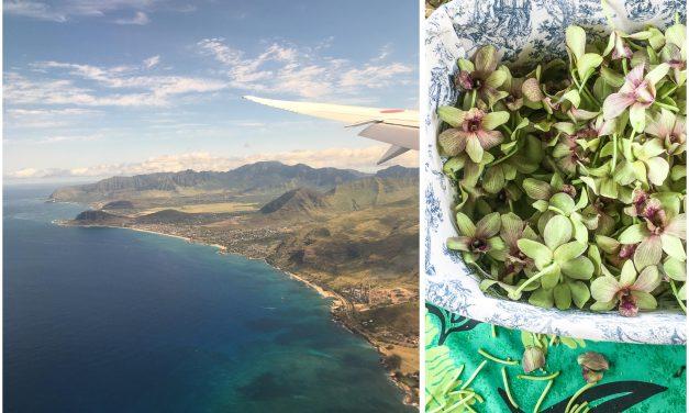 Aloha Hawaii – Ankommen zum Lei Day, duftende Regenwälder im Nebel, ein Tempelbesuch und himmlische Garlic-Lemon Shrimps auf Oahu