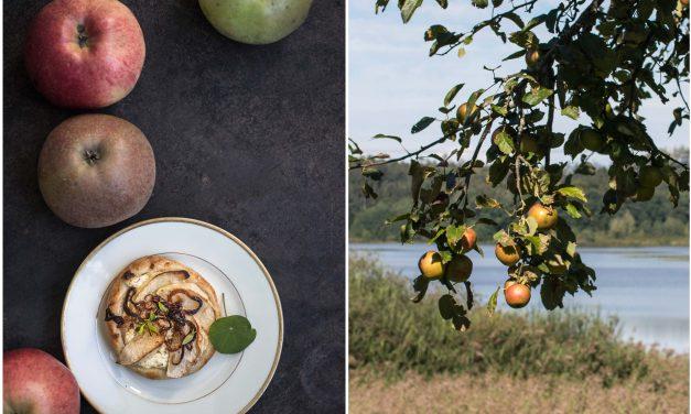 Schnelle Apfeltörtchen mit Ziegenkäse und Honig und warum Streuobstwiesen so wichtig sind