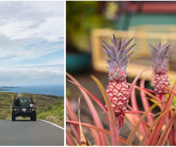 Aloha Maui - surfende Ziegen, Ananas Sekt, tropische Farmen und die andere Straße nach Hana